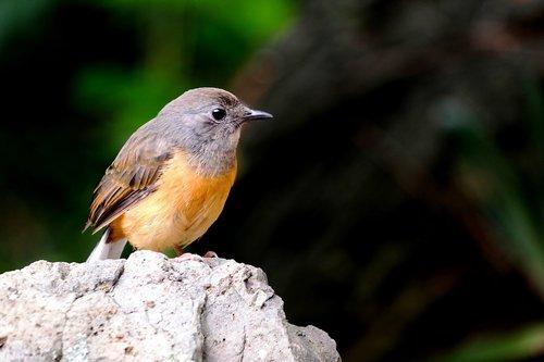 bird  oahu  island