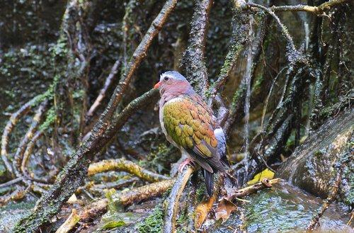 bird  rainforest  wet