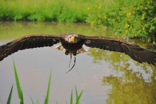 bird  eagle  animal