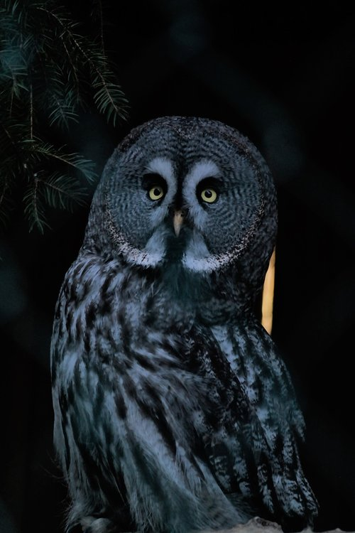 bird  owl  nocturnal
