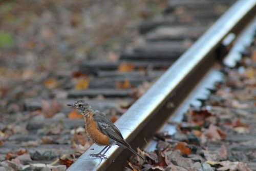 bird  rail  suicide