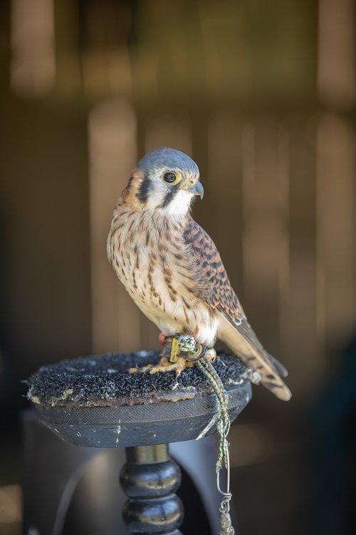 bird  hawk  perched