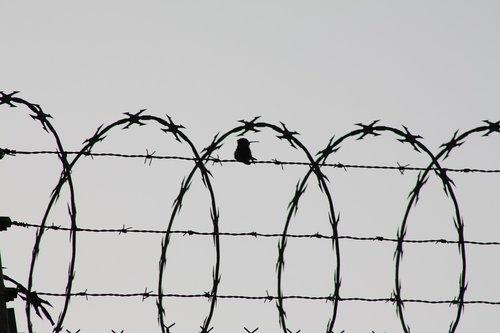 bird  cage  birds