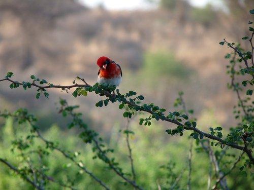 bird  africa  tanzania