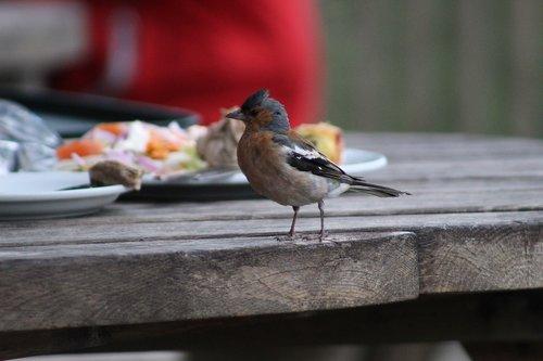 bird  curious  nature