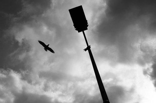 bird  black and white  mono