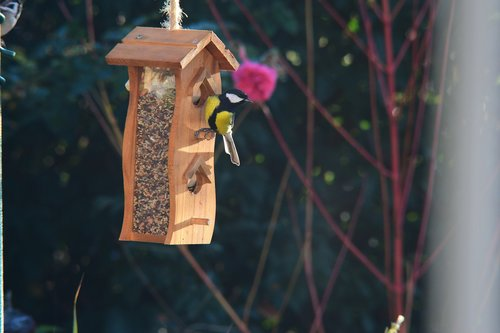 bird  bird feeding tray  garden