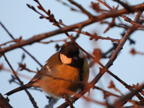bird  gil  small