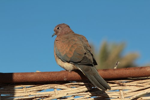 bird  egypt  animal
