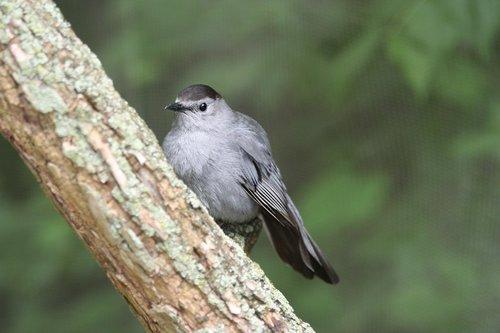 bird  zoo  perch