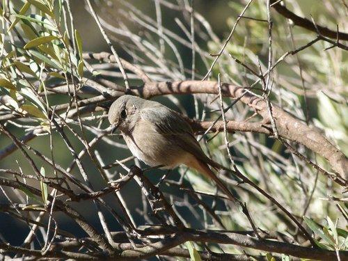 bird  tree  olive
