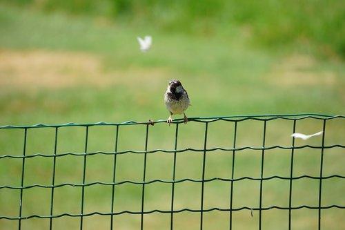 bird  fence  butterfly