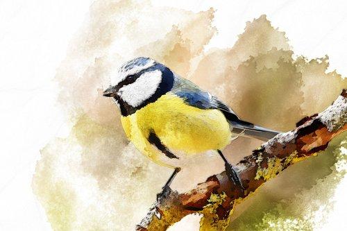 bird  woodland animal  watercolor image