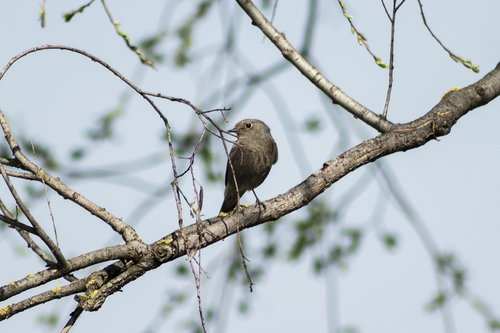 bird  birds  songbird