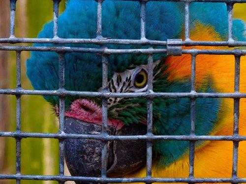 bird  jail  metal