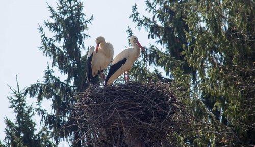 bird  storks  jack