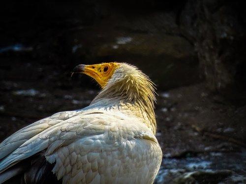 bird  adler  animel
