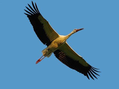 bird  habitat  stork