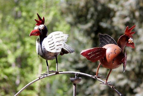 bird  hahn  animal