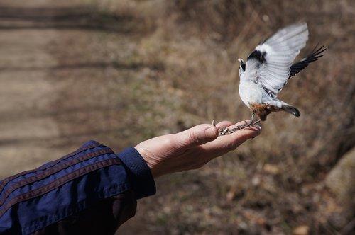 bird  bird feeding  feeding