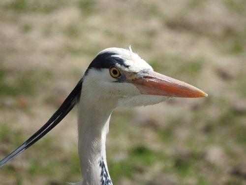 bird  beak  nature