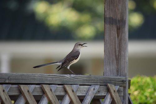 bird  animals  nature