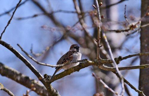 bird  mus  plumage