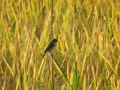 bird  wildlife  india