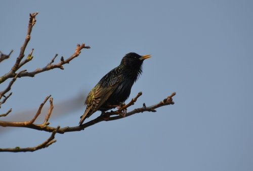 bird  star  nature