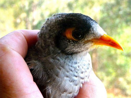 bird beak head