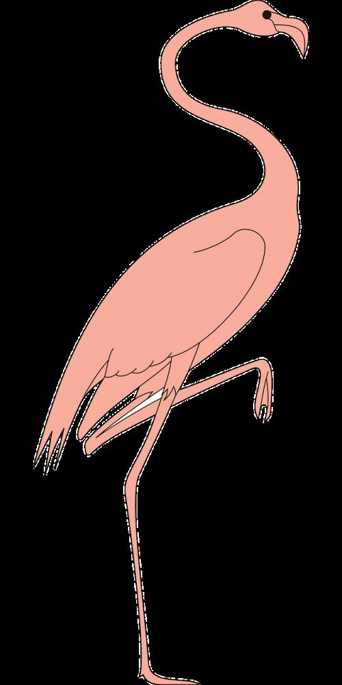 bird leg raised