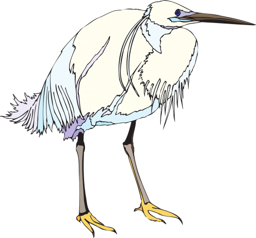 bird heron white