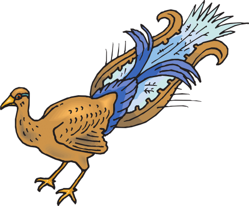 bird wings peacock