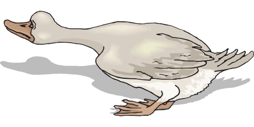 bird duck wings