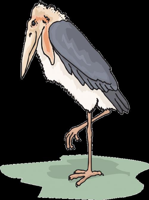 bird wings stork