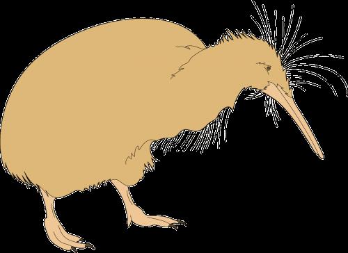 bird kiwi beak