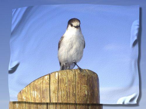 bird post sky