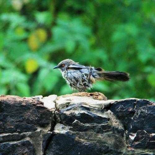 bird small feathers