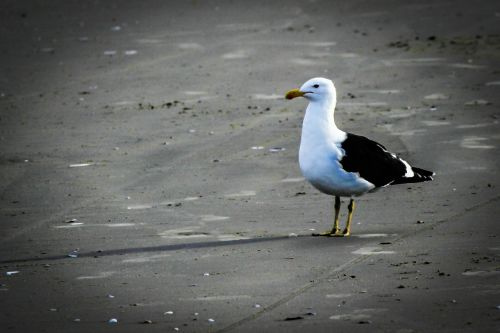 bird beach mar