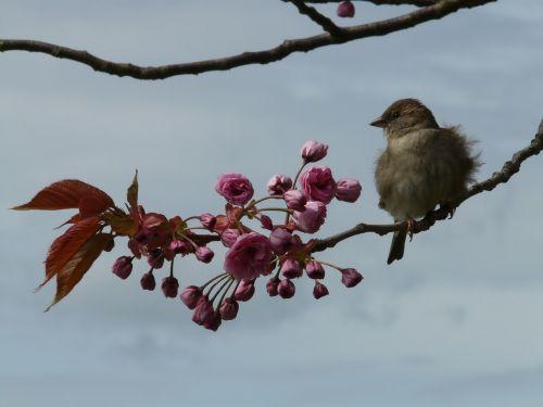 bird branch sit