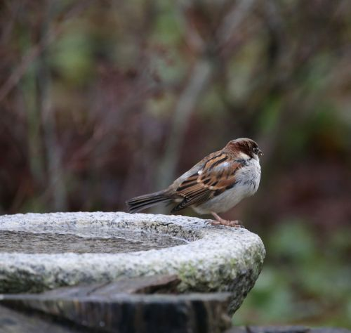 bird house sparrow passer domesticus