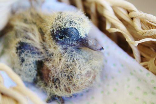 bird young bird nest