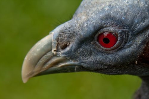 bird blue eye