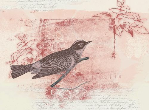 bird drawing digital creation