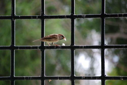 bird wrought iron breadcrumbs