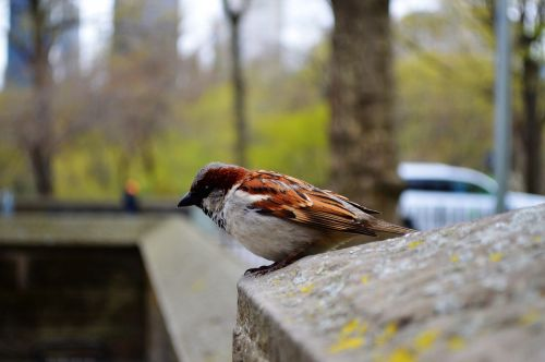 bird sparrow nature