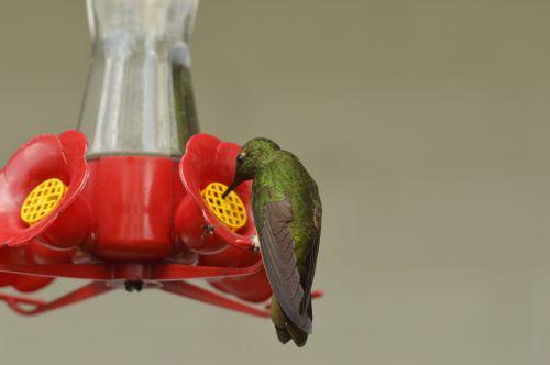 bird bebe water