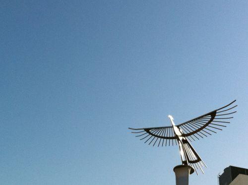 bird gold belong white space