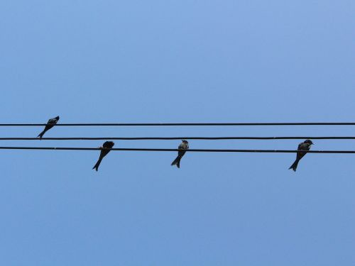 bird wiring hardness sky