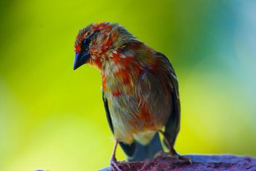bird seychelles close-up